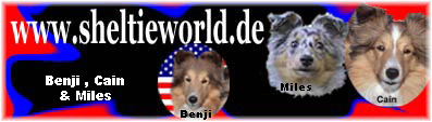 Banner Sheltieworld